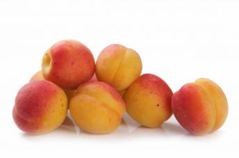 abrikos-uzbekskiy